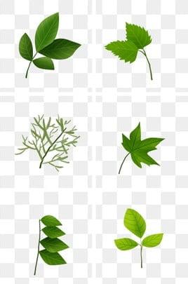 春天树叶绿叶落叶创意简约元素图片