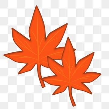 枫叶秋植物秋初秋天 秋日 秋收季节 png图片和剪贴画图片