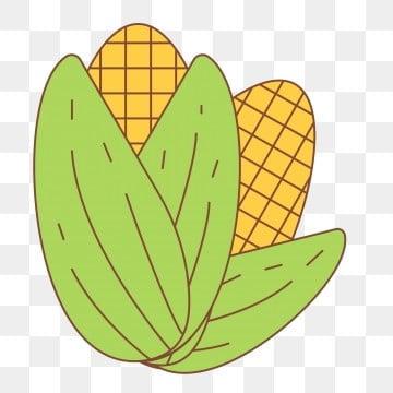 金黄玉米 收获 卡通画 幼儿园卡通玉米儿童画简笔画 光盘行动 幼儿园