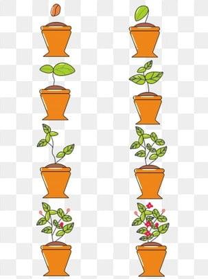 清新可爱植物生长过程图 树苗 成长图片