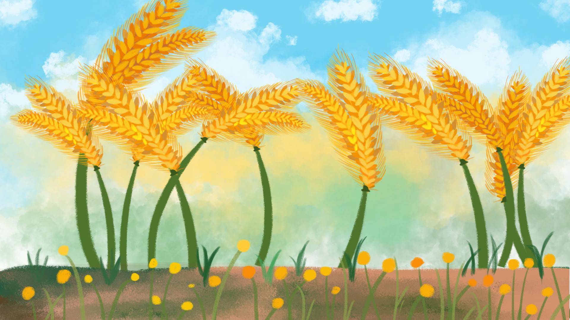 Картинки колоски в поле для детей