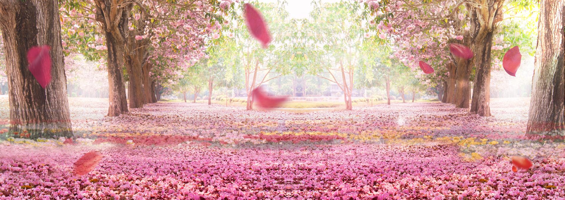 Romantic Background Pink Wedding Flowers Background