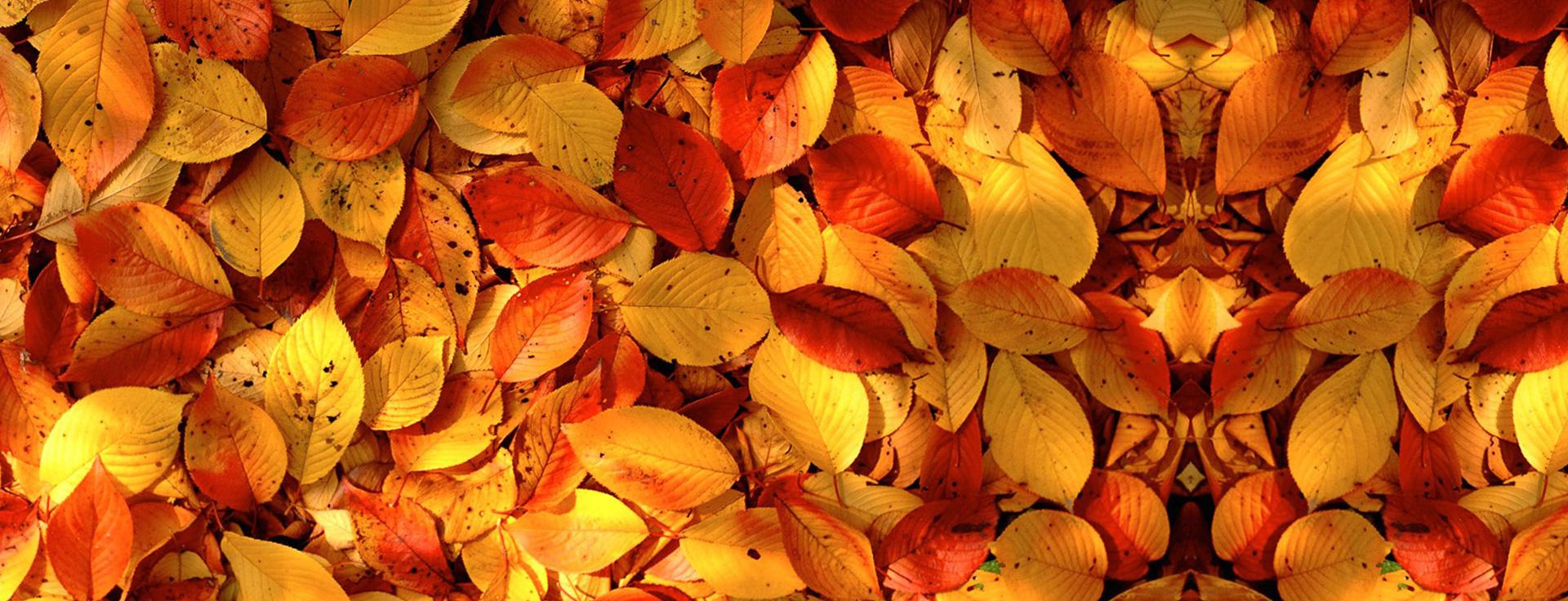 les arbustes les plantes ligneuses les feuilles plantes