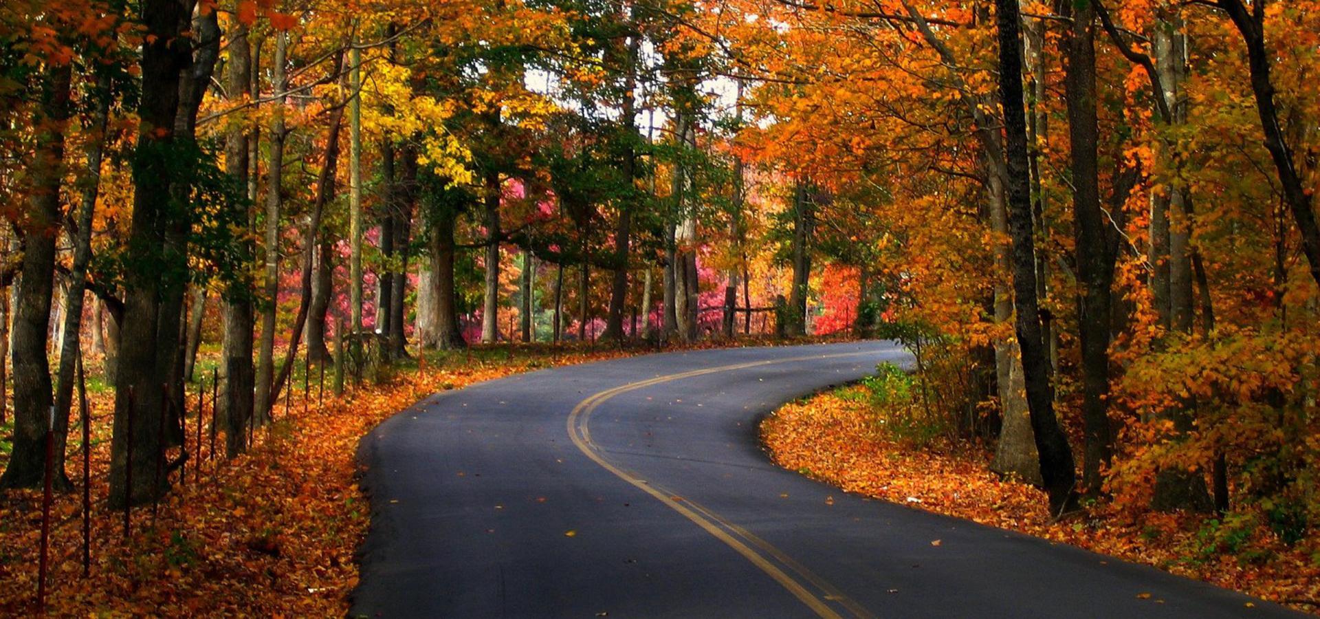 arbre l u0026 39 automne automne forest contexte ruelle les arbres