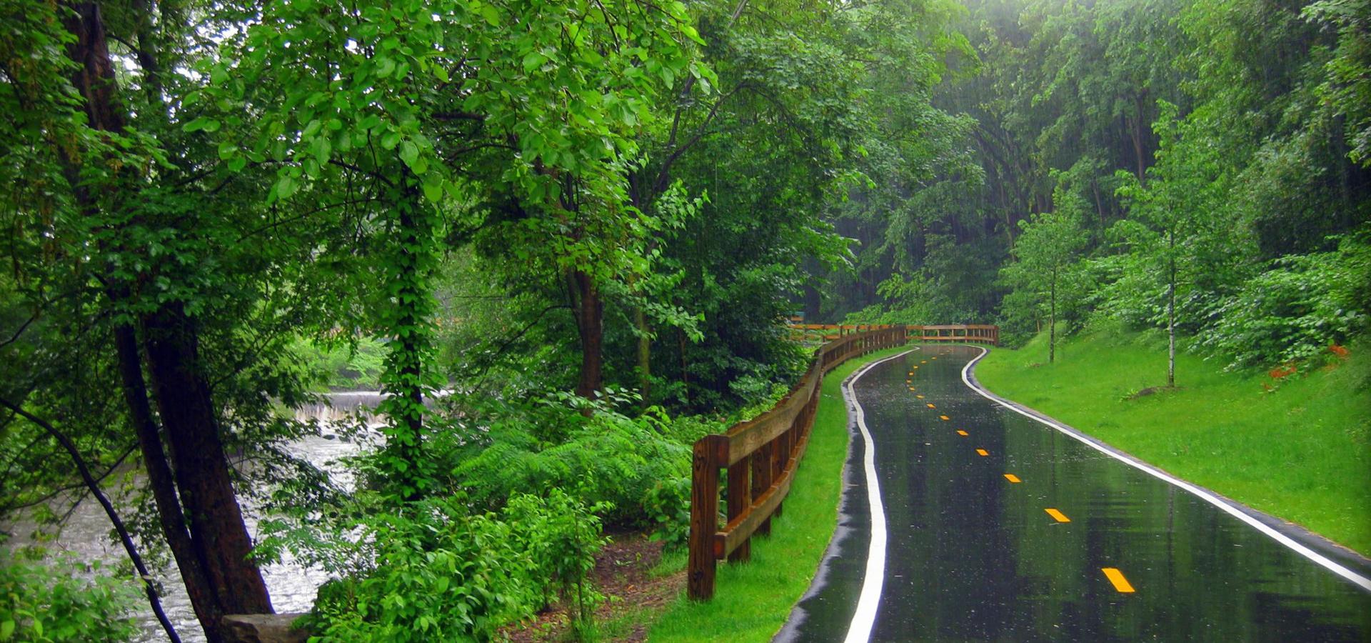 Rain Park Park Rain Forest Background Image For Free