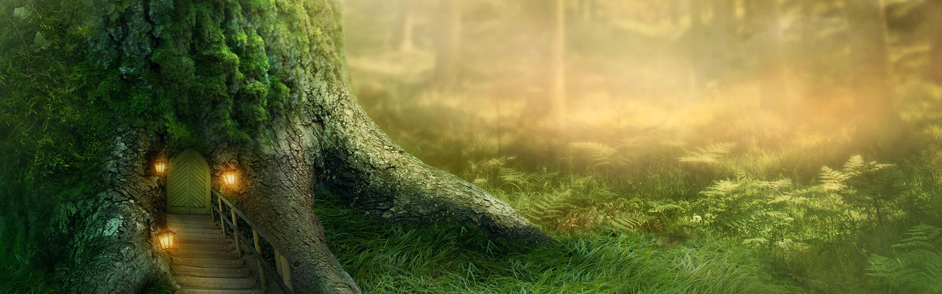arbre le paysage forest l u00e9zard contexte de l u0026 39 eau park de l