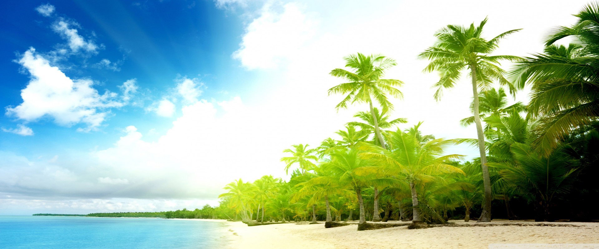 summer seaside coconut tree background  summer  seaside