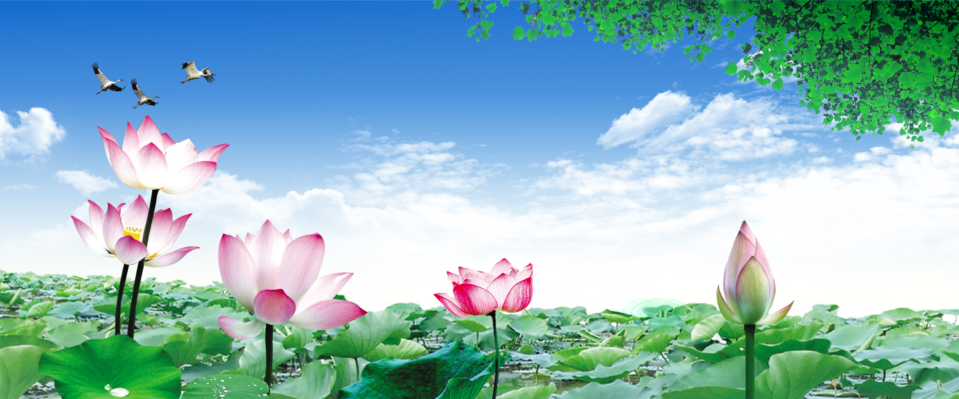 Nature Banner Background, Lotus, Leaf, Natural Background ...