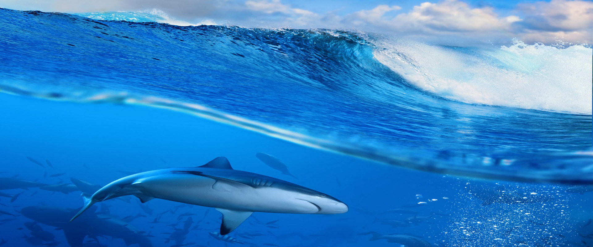 ocean whale background  ocean  whale  wave background image for free download