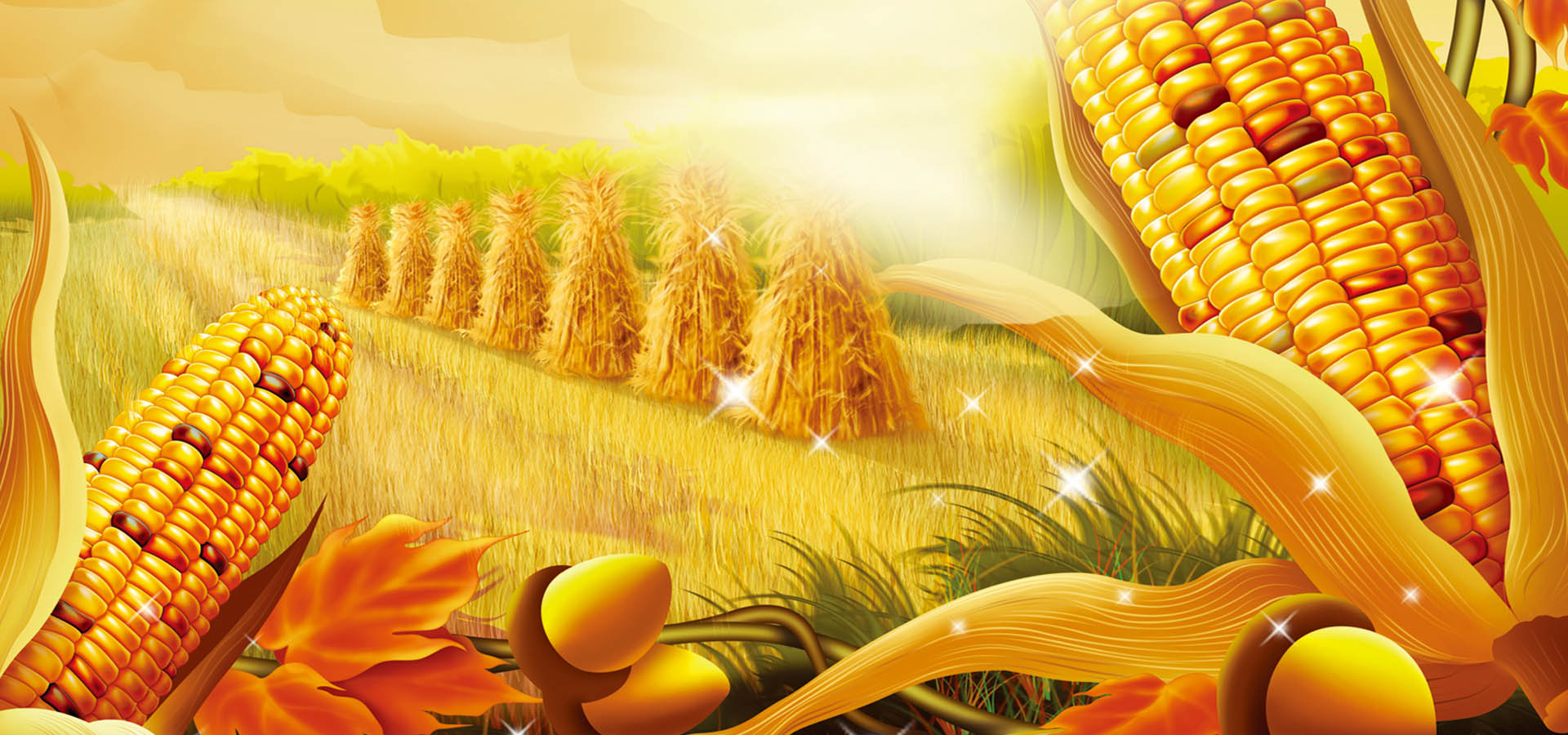 autumn corn background  autumn  corn  grass background image for free download