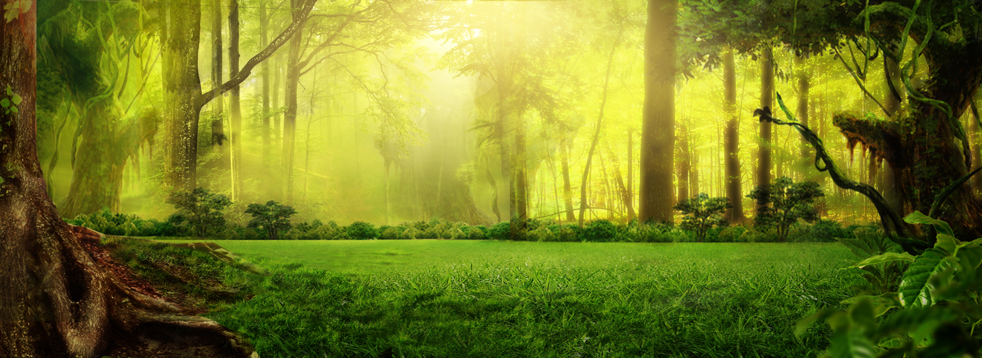 fantasy forest green background  nature  green  forest background image for free download