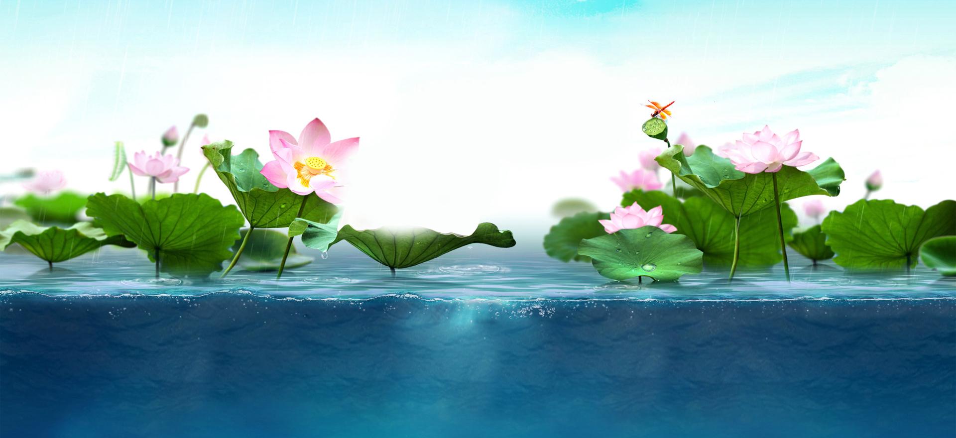 fresh lotus background  fantasy  dream  promotions