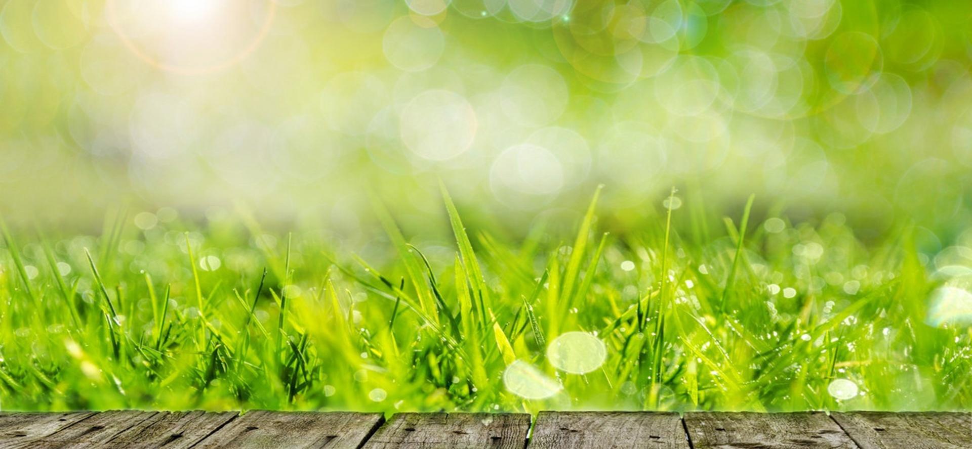 dandelion herb plante poutre contexte le printemps summer