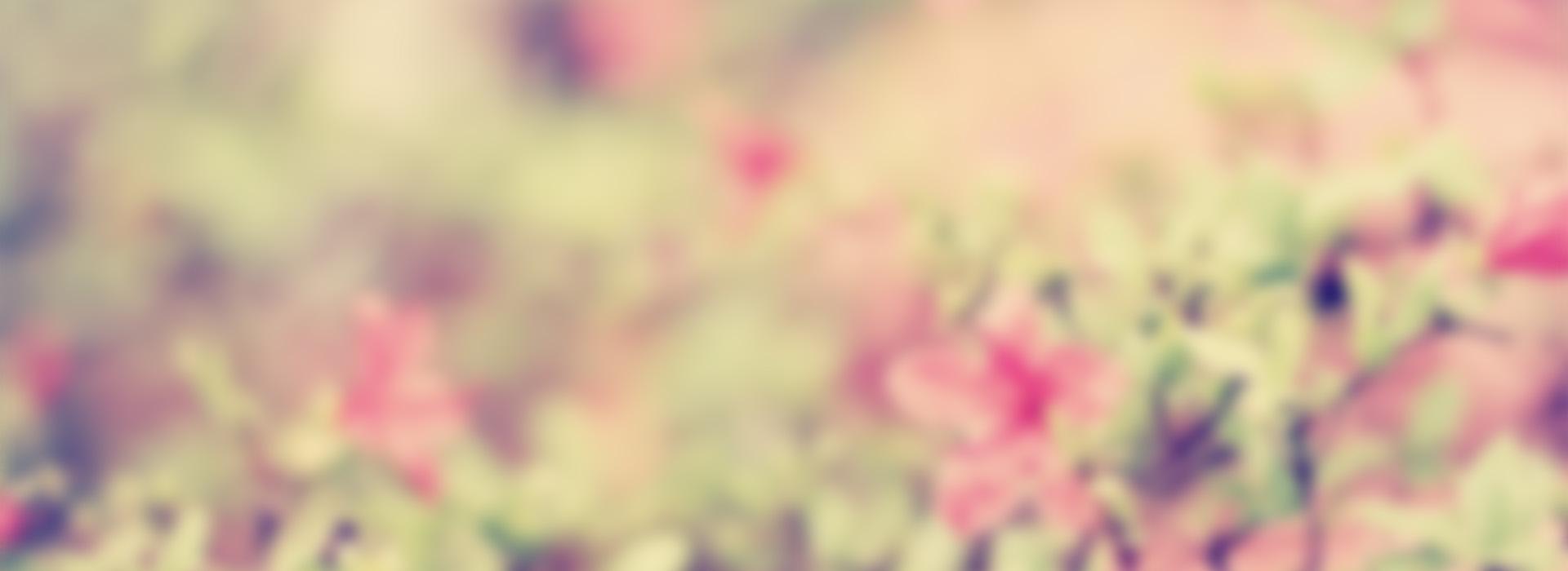 lindas flores de fundo desfocado a est u00e9tica flores flores