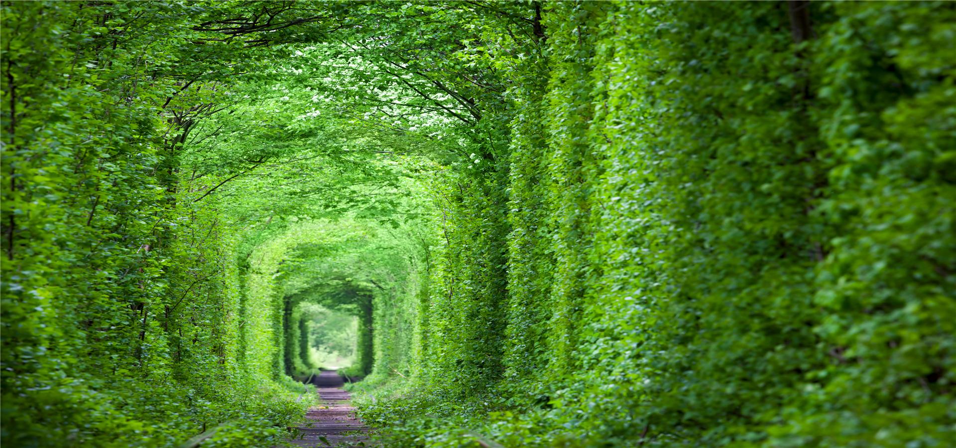 la texture de la plante herbac u00e9e printani u00e8re sch u00e9ma summer natural image de fond pour le
