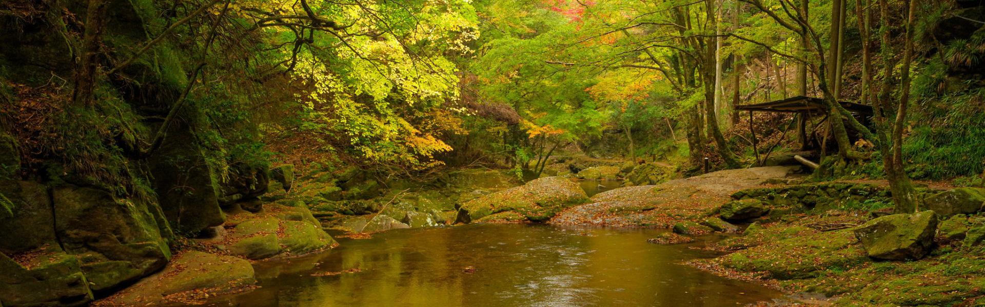 Urwald Pool Der Wasserfall Hintergrund Foto Und Bild Zum Kostenlosen Download