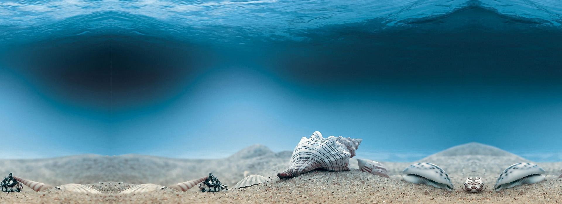 blue ocean hintergrund die muschel muscheln der strand. Black Bedroom Furniture Sets. Home Design Ideas