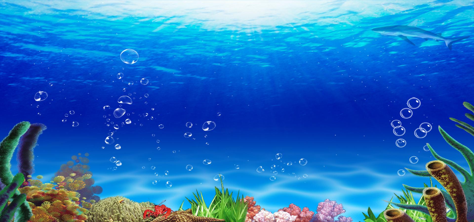 contexte l u0026 39  u00e9cran star les  u00e9toiles contexte aquarium