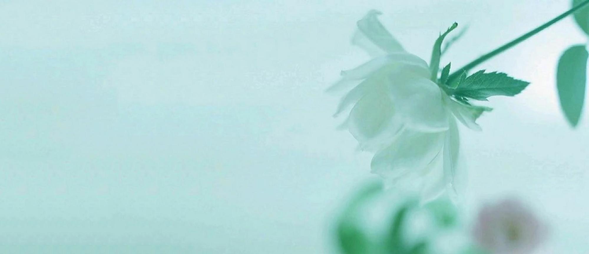 Fondos De Color Verde Agua: Textura Agua Ray Stingray Antecedentes Pescado Fondos De