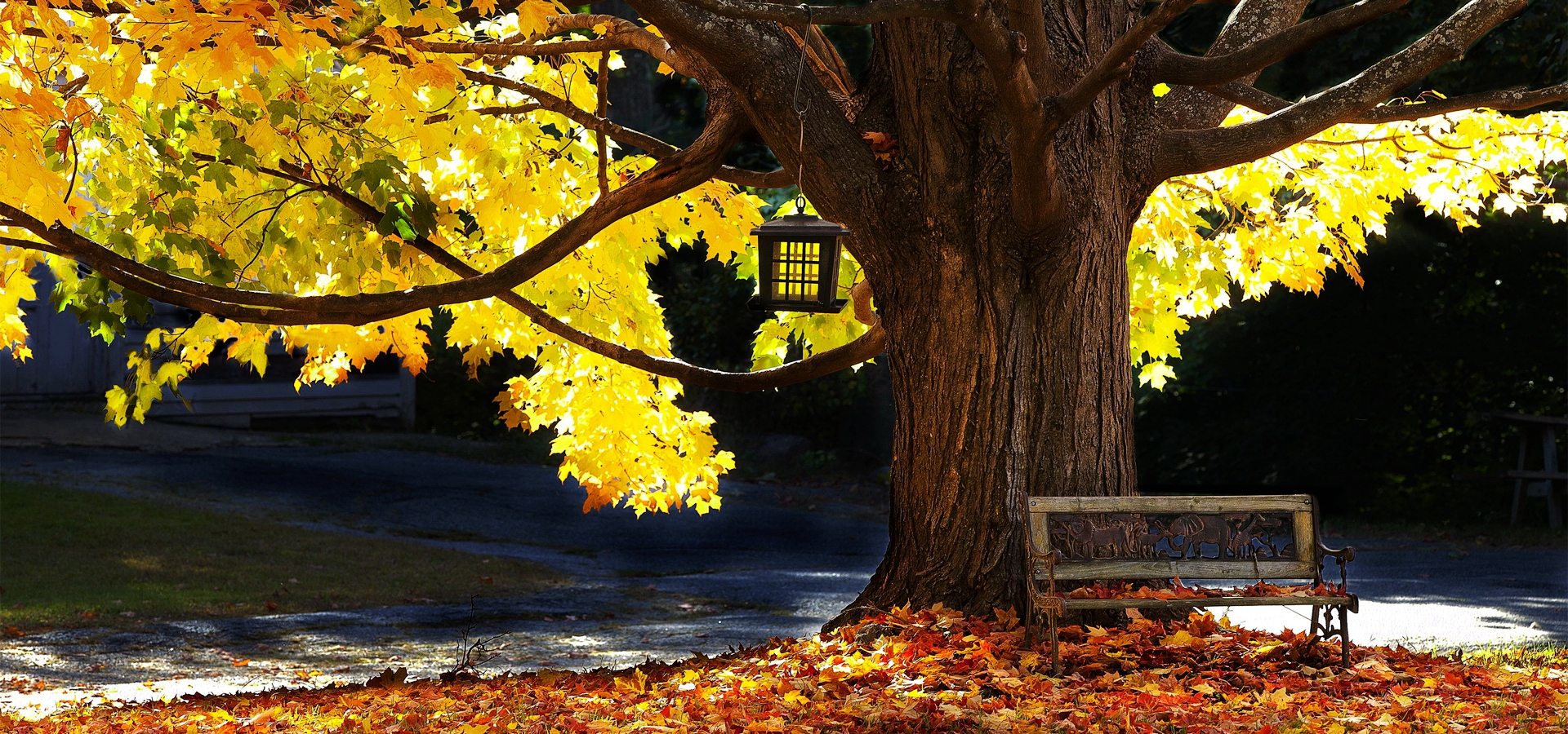 Park Bench, Park, Bench, Autumn Background Image For Free