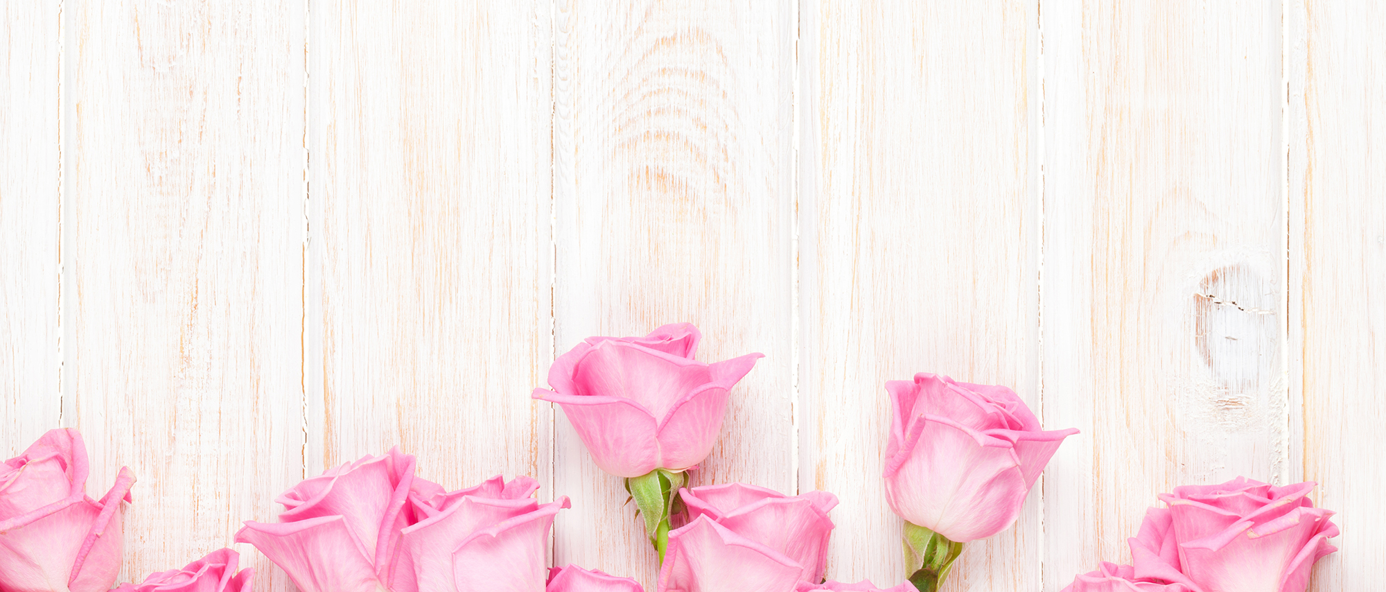 pink roses background  happy valentines day  valentines