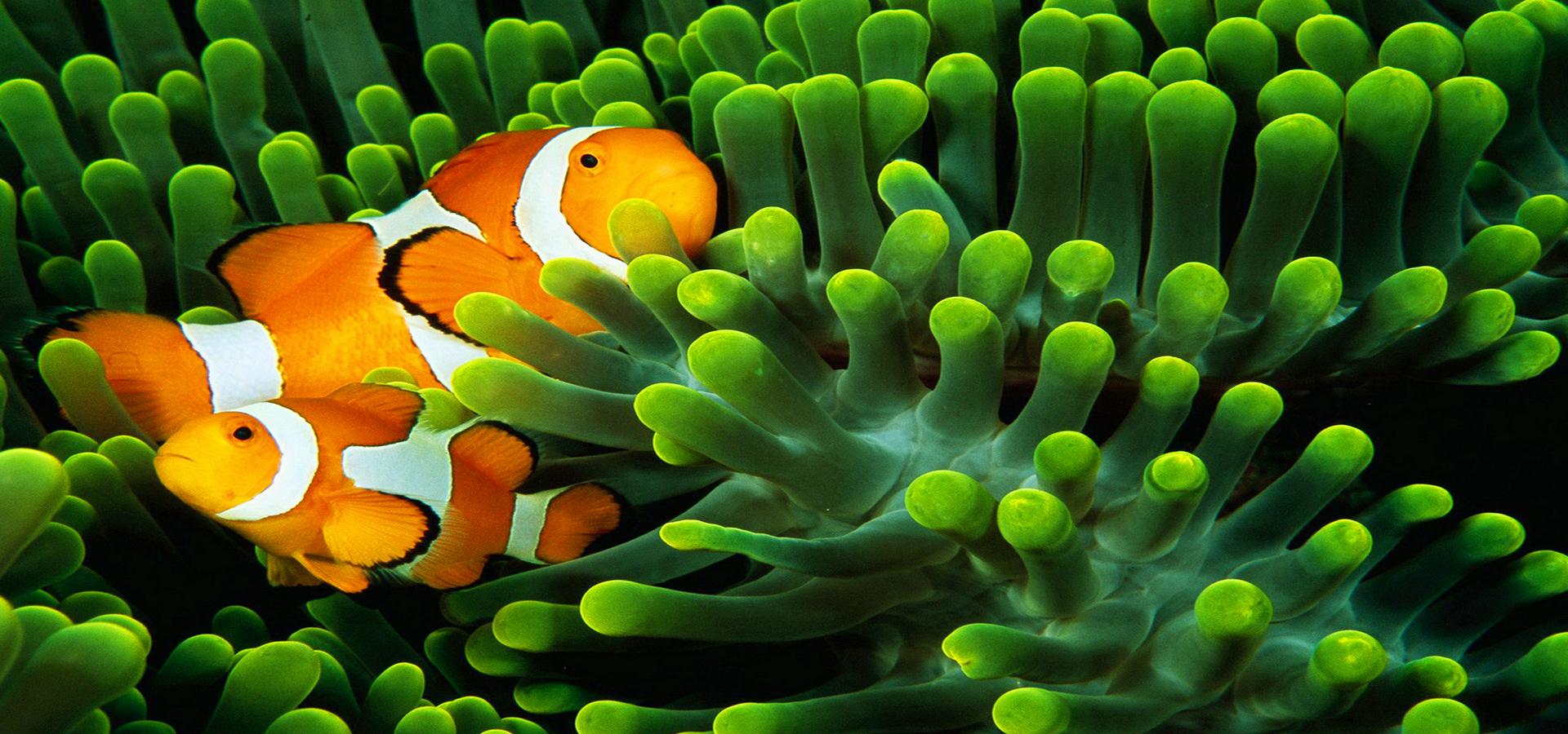 poissons de fond poisson vert algues image de fond pour le