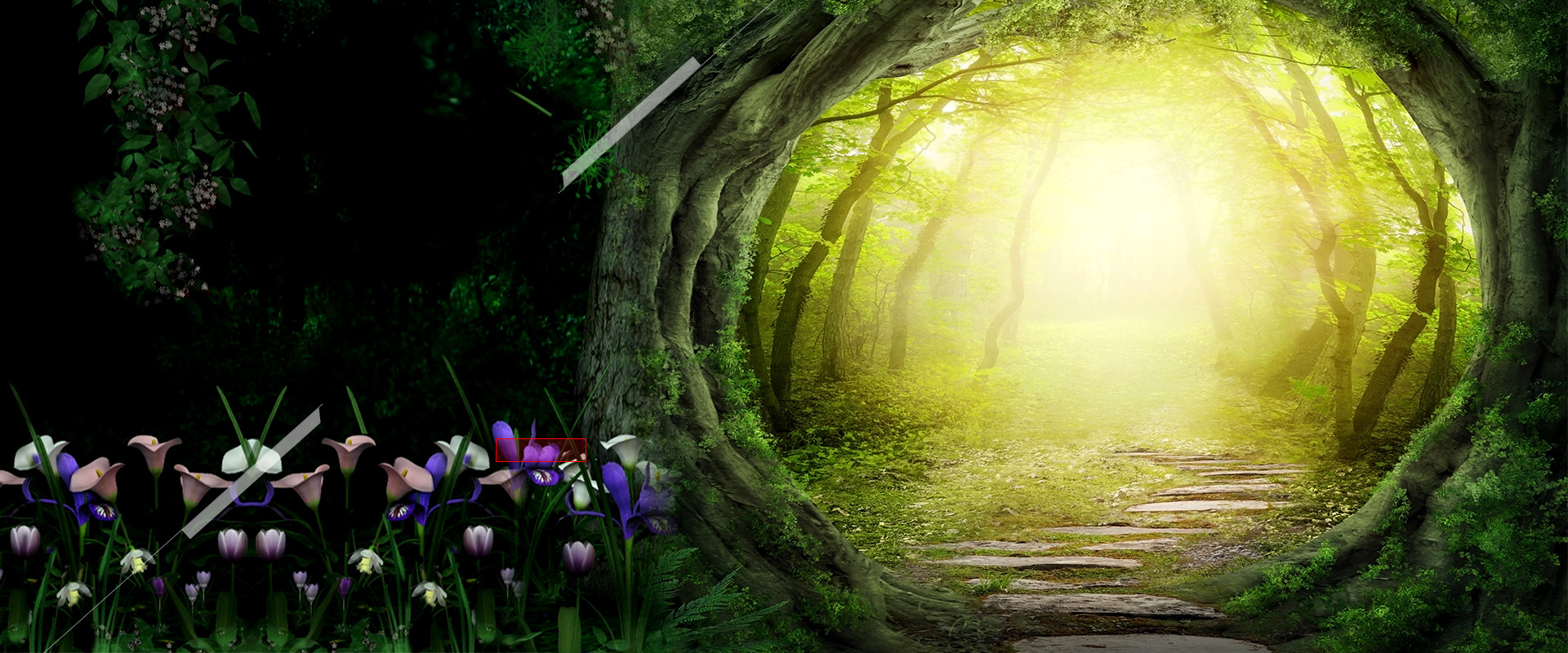 Forest flowers background natural beautiful romantic - Nature love images free download ...