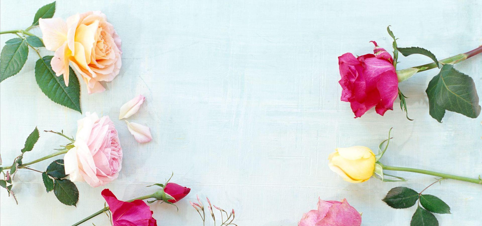rose rideau de douche fleur rideau contexte le coton