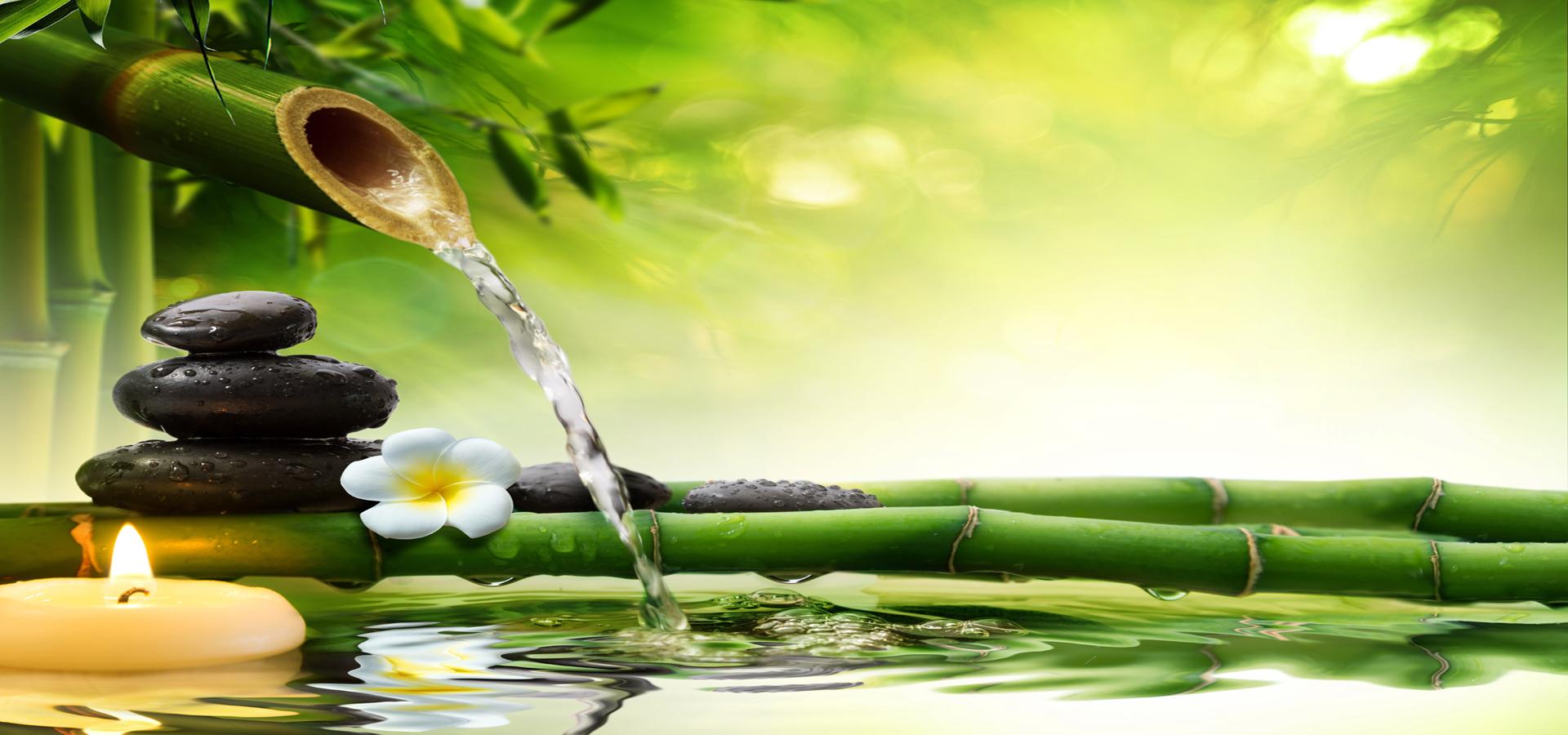 le bambou tirez de l u0026 39 eau plante contexte la r u00e9flexion