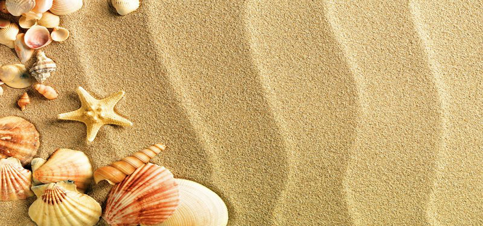 fresh and beautiful beach background  sand  shell  poster background image for free download