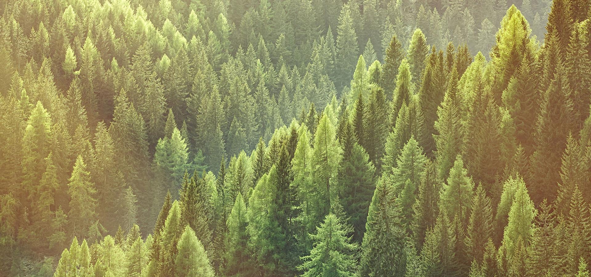 vert for u00eat une vue  u00e0 vol d oiseau vert for u00eat une vue