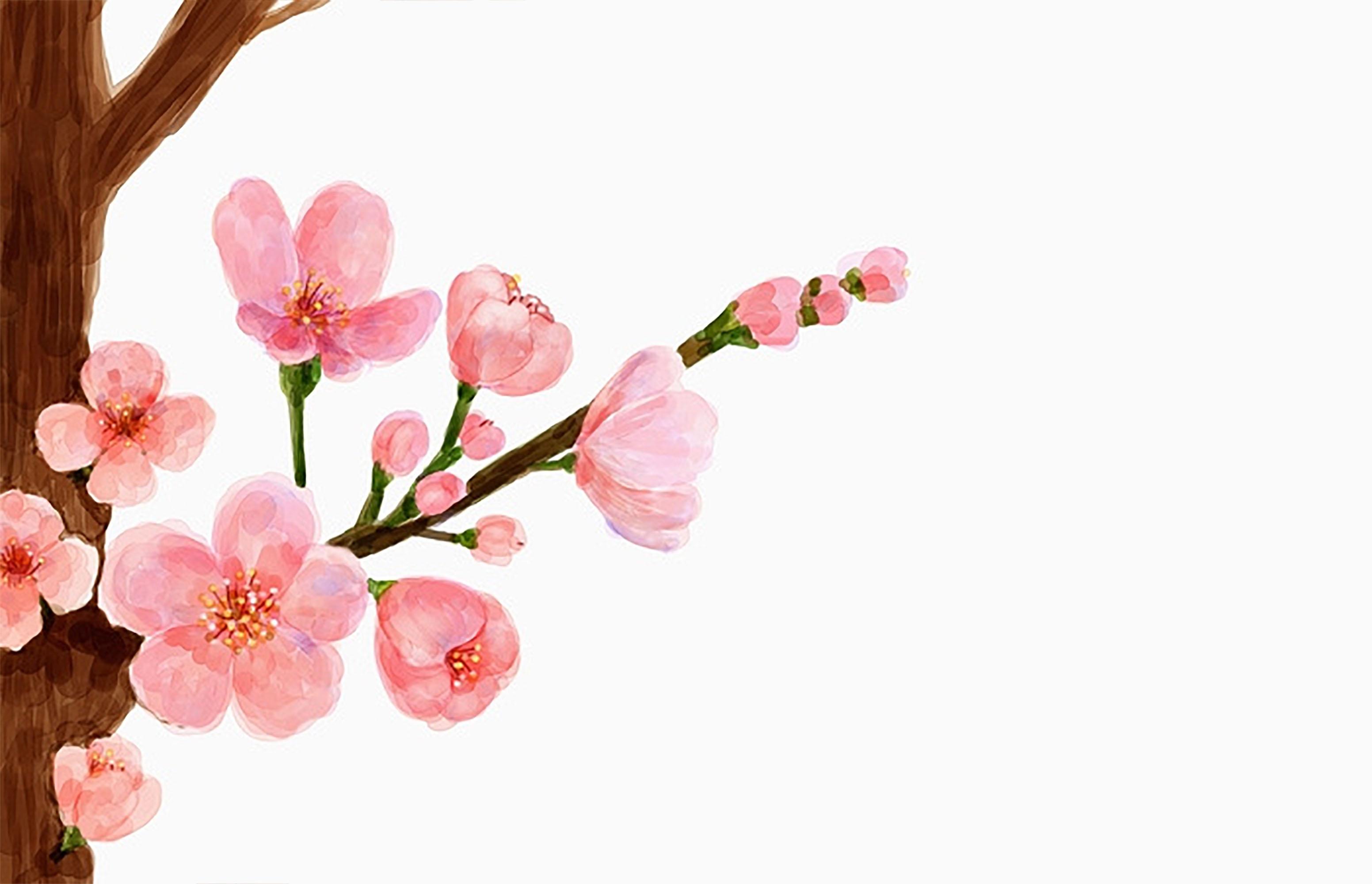 Rosa Fiori Di Pesco Rosa IL Fiore Di Pesco Caldo Bianco