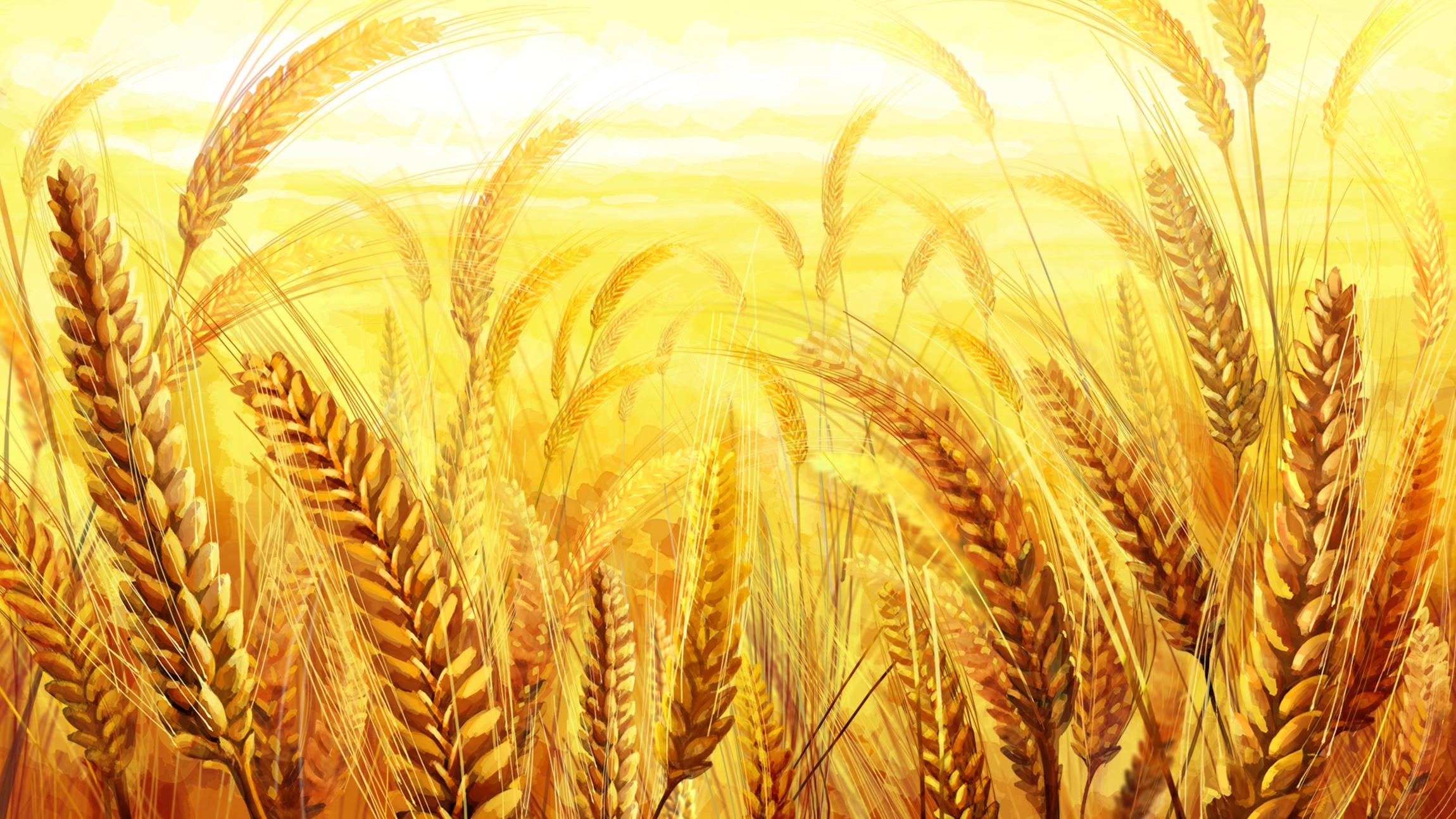 les champs de bl u00e9 l automne champ de bl u00e9 aux image de fond