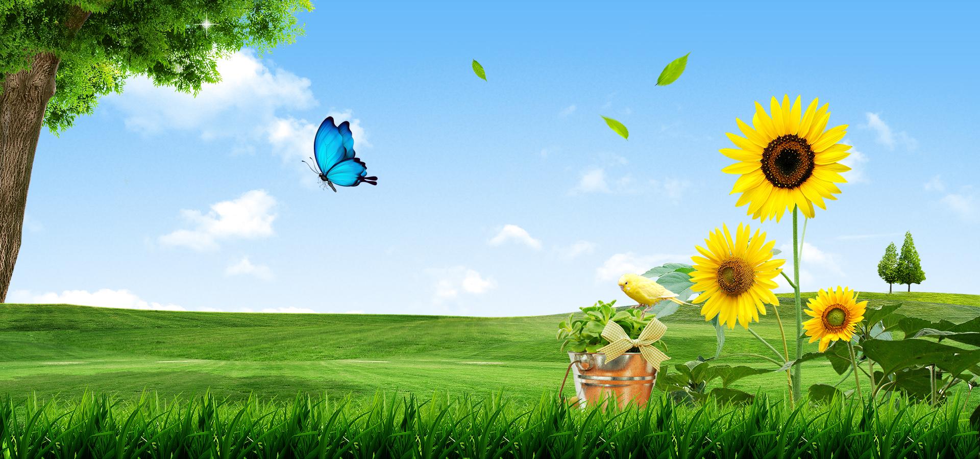 Girasole Desktop Gli Alberi La Farfalla Semi Di Girasole Immagine Di