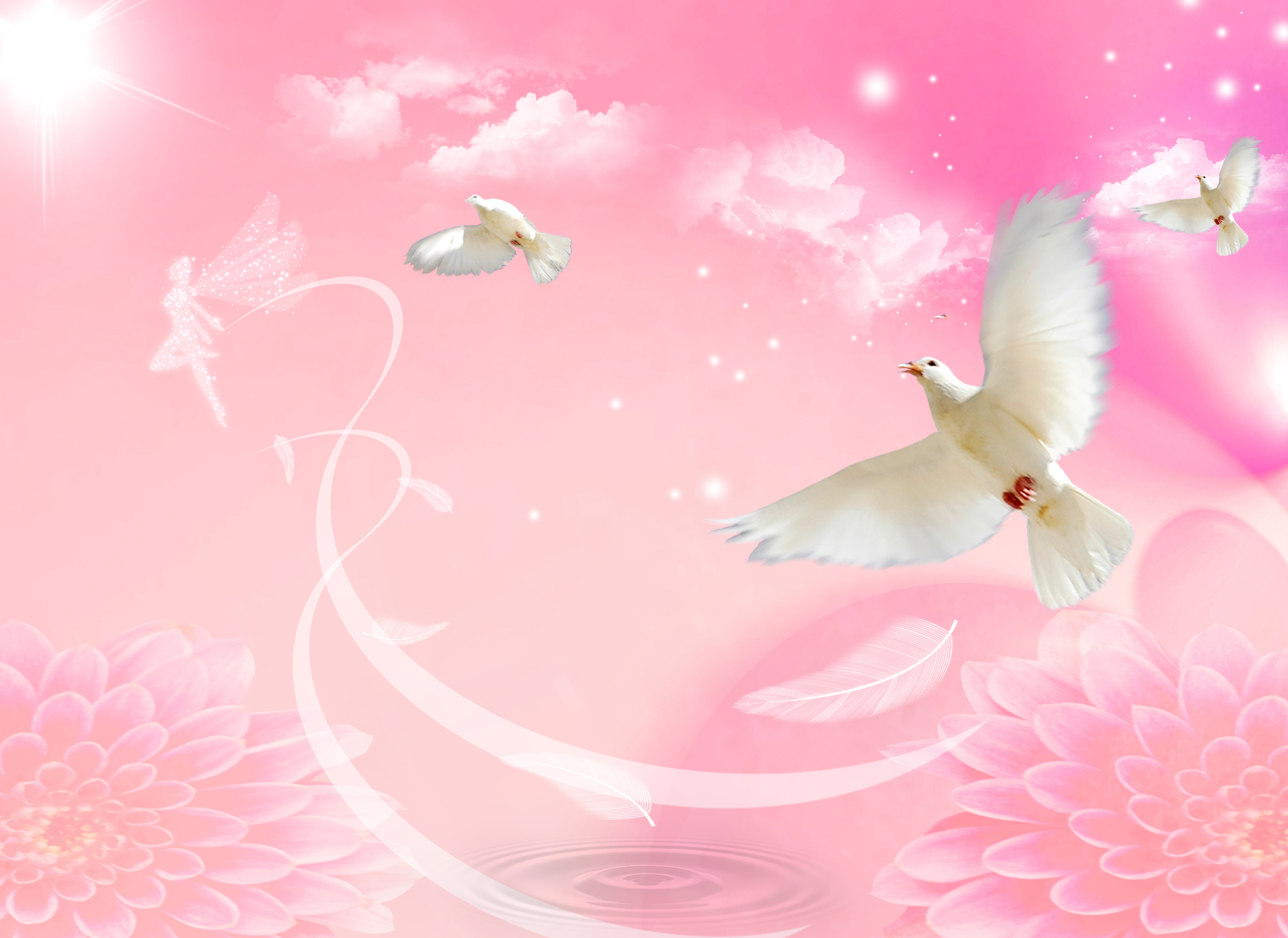 Pink Clouds Background Dove Of Peace, Pink, Peace Dove, Clouds ...