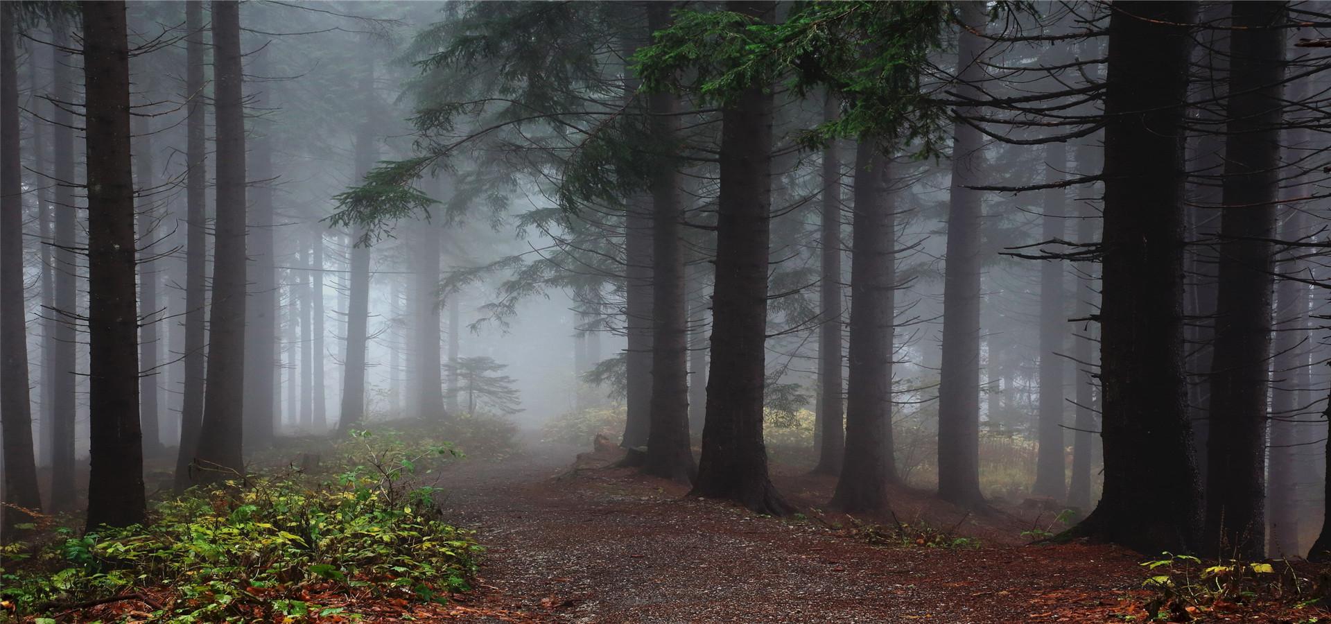 arbre forest les plantes ligneuses les arbres contexte