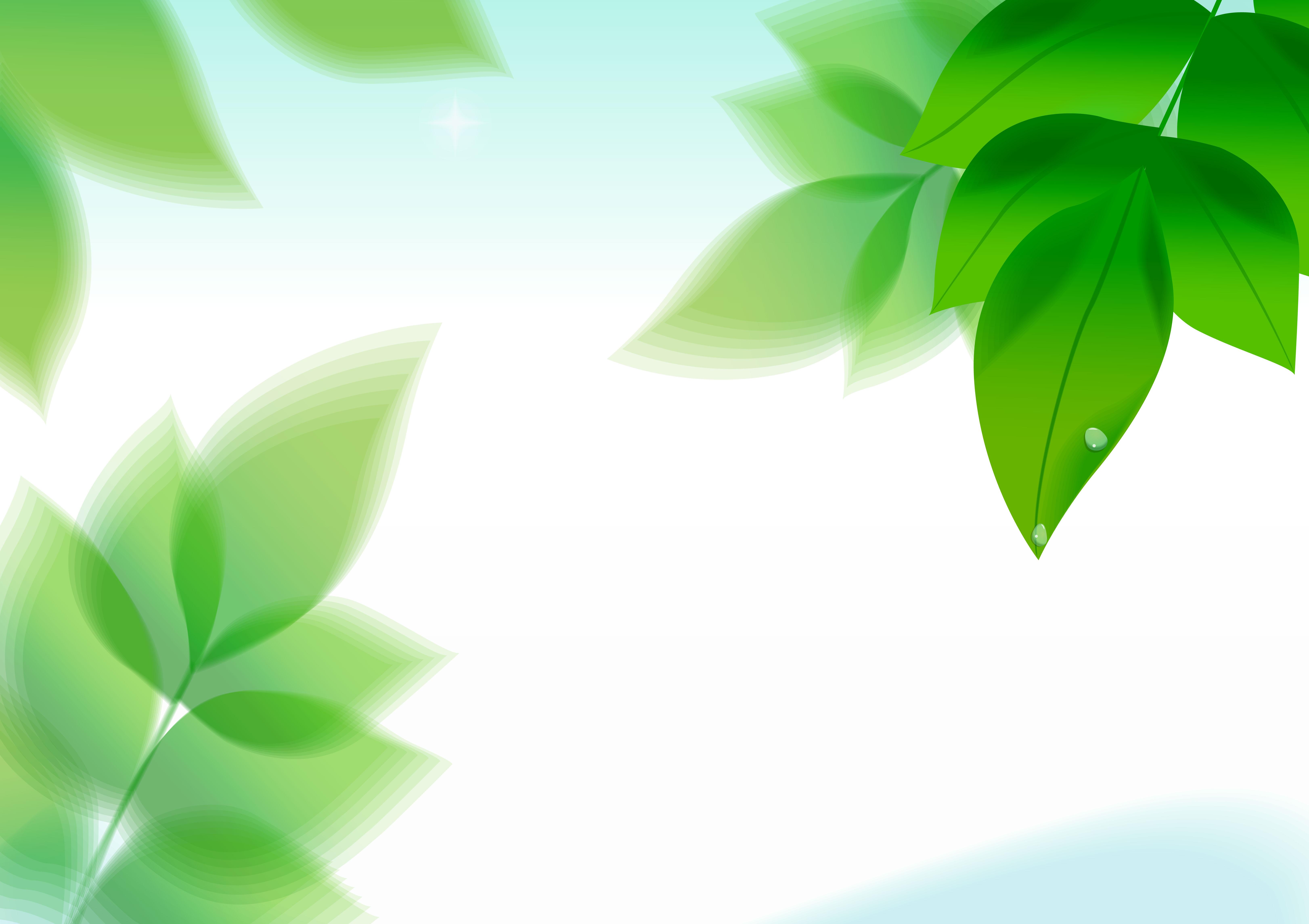 leaf plante le bambou conception contexte la ros u00e9e des