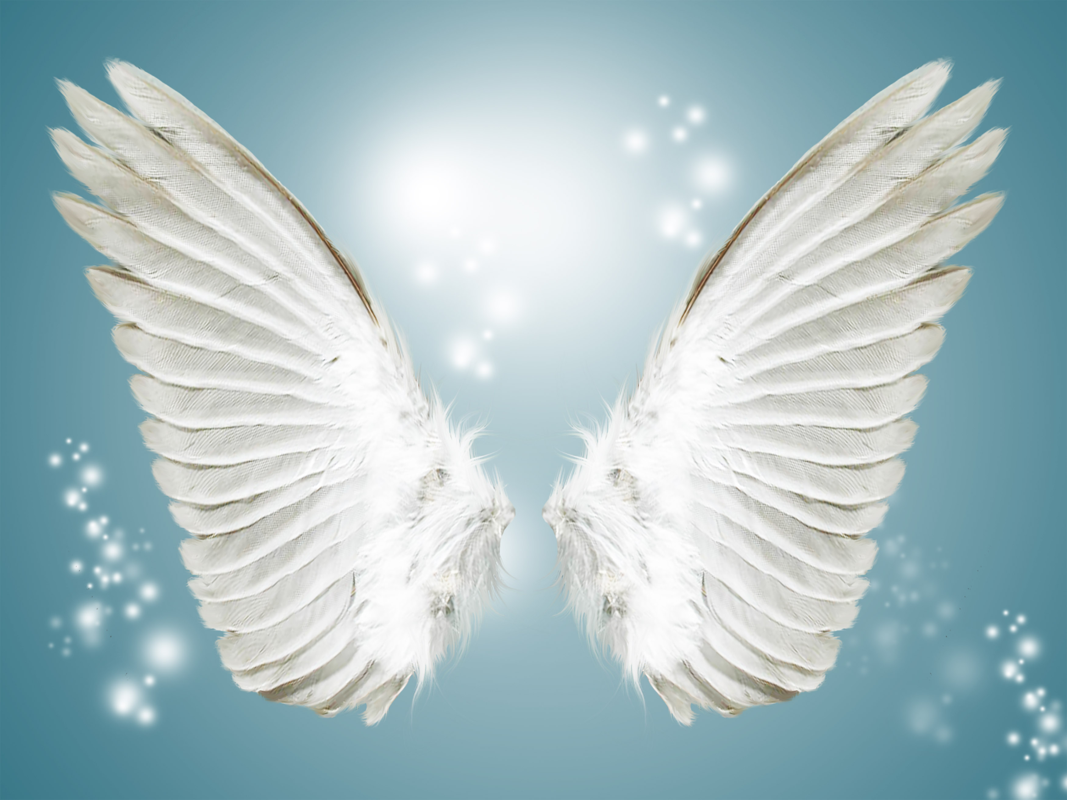 angel white wing background  blue  angel  wings background image for free download