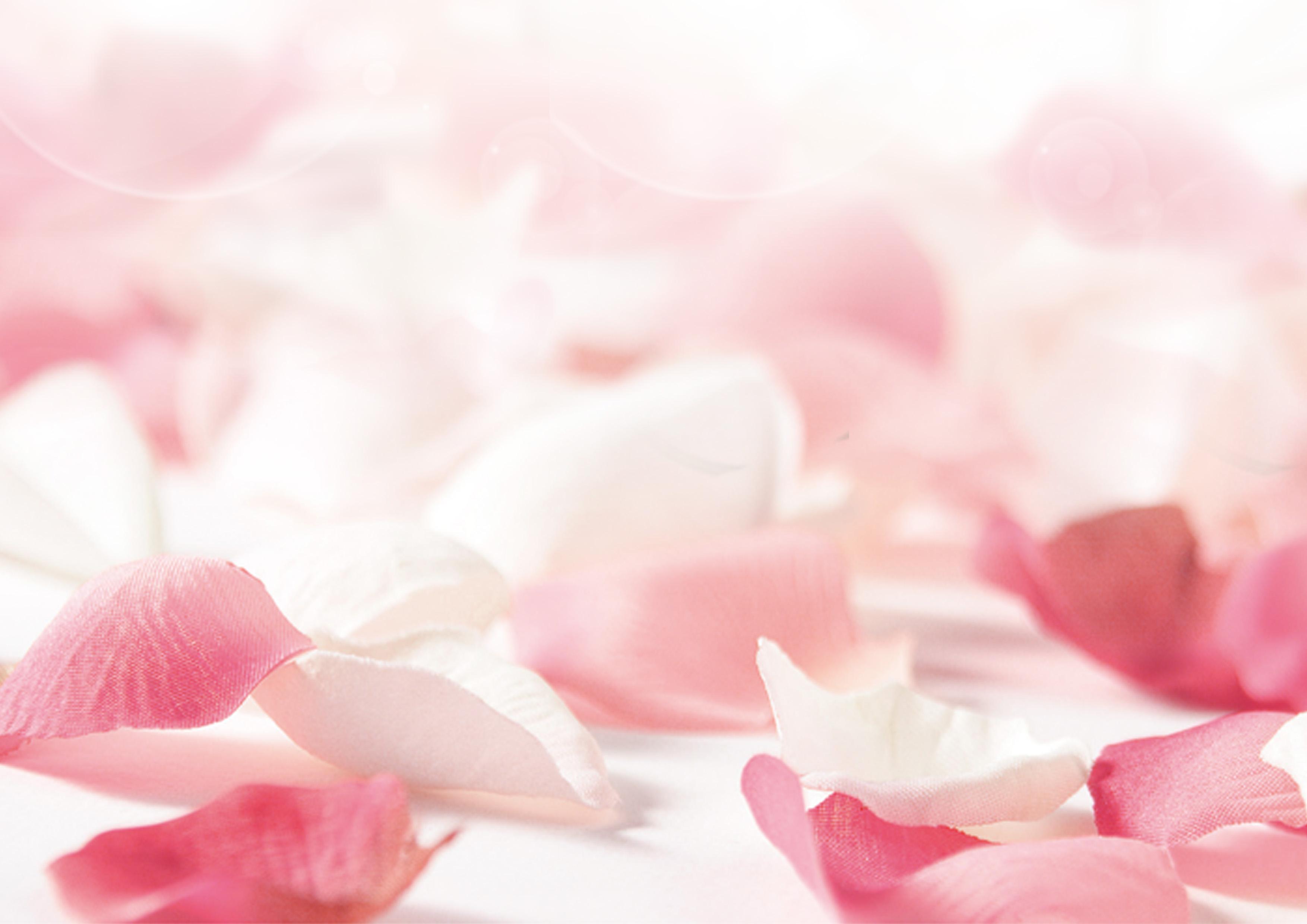 pink petal flower fondo rosa flores floral spa imagen de