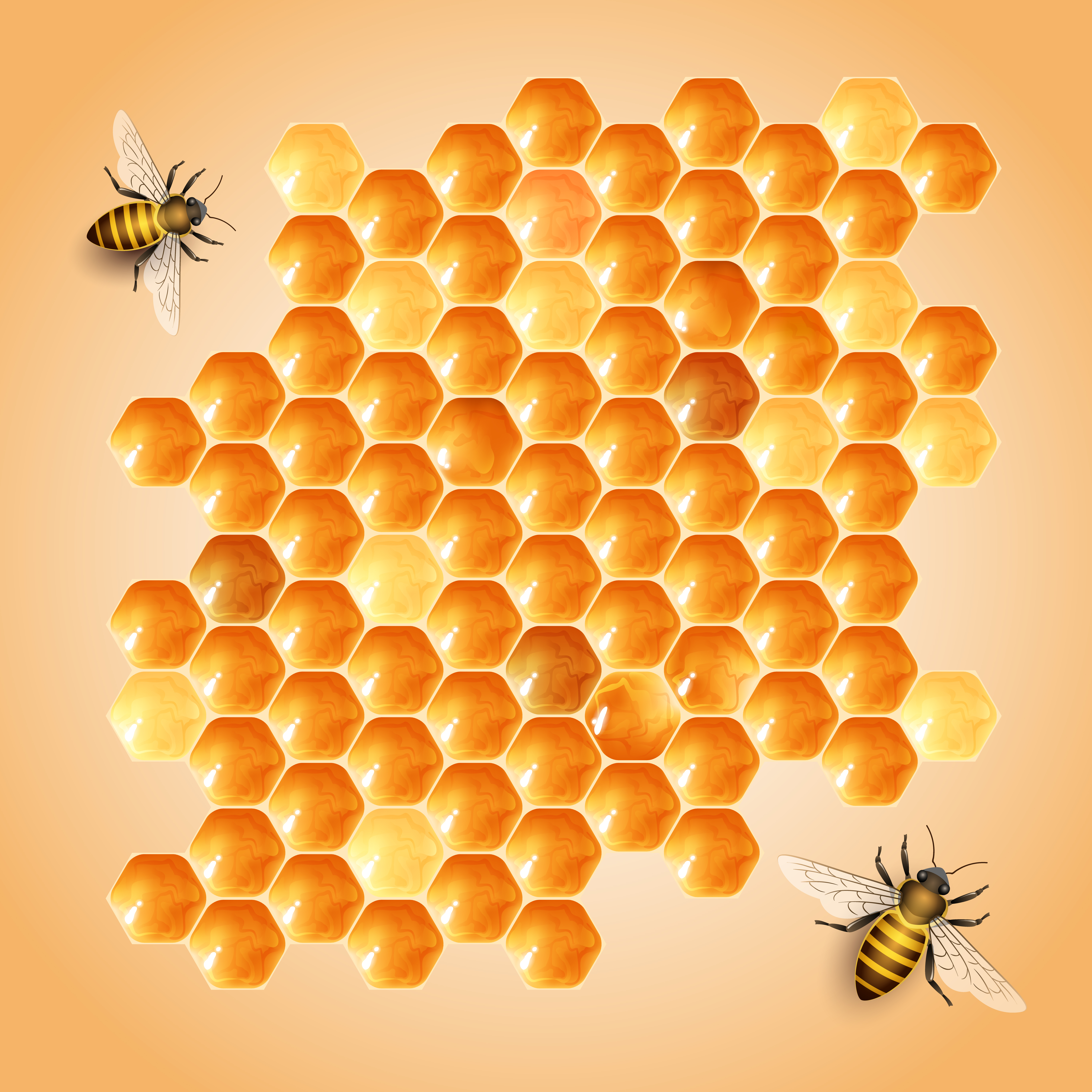 vector background bee hive  yellow  honeycomb  honey