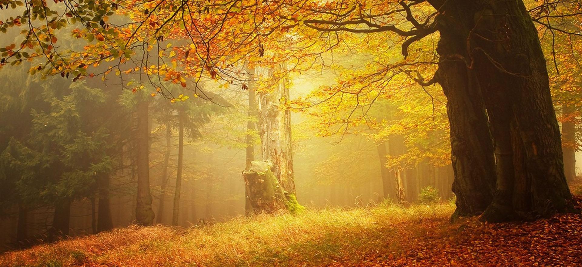 as paisagens de fundo de luz amarela a paisagem a luz
