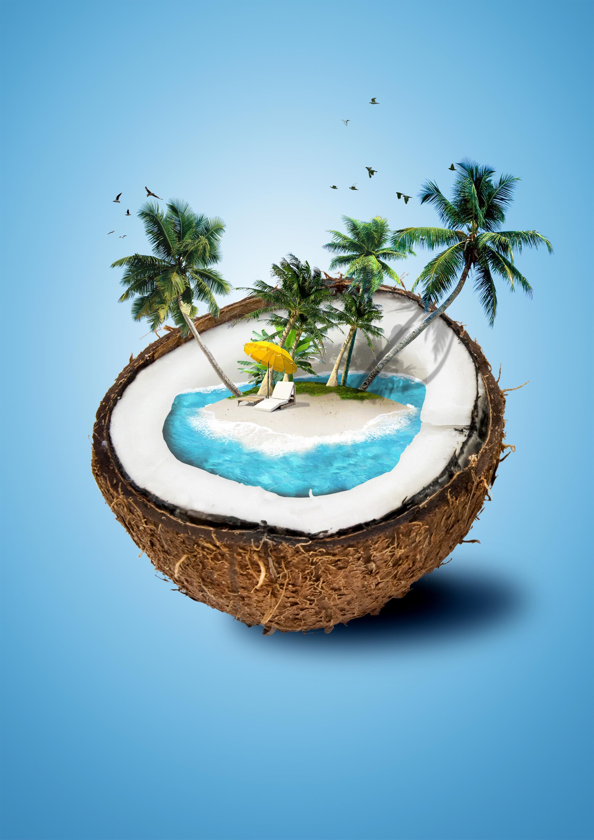 noix de coco la nourriture arbre palm contexte island plante leaf image de fond pour le. Black Bedroom Furniture Sets. Home Design Ideas