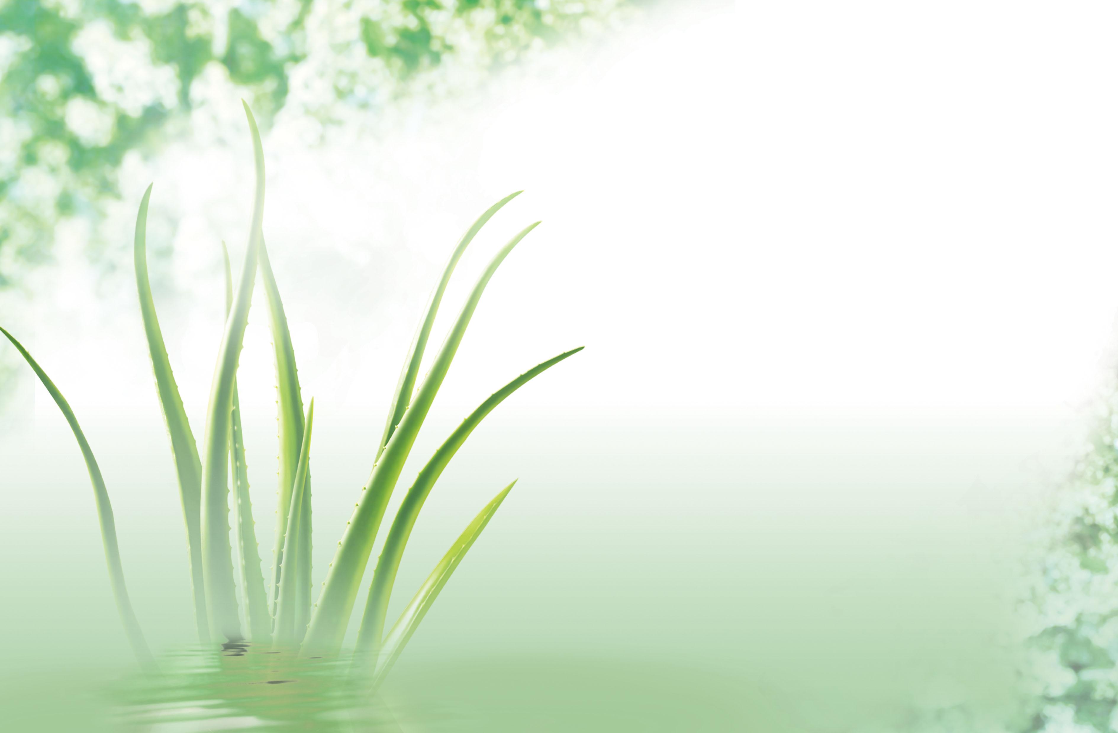 des affiches de l aloe vera vert frais aloe image de fond