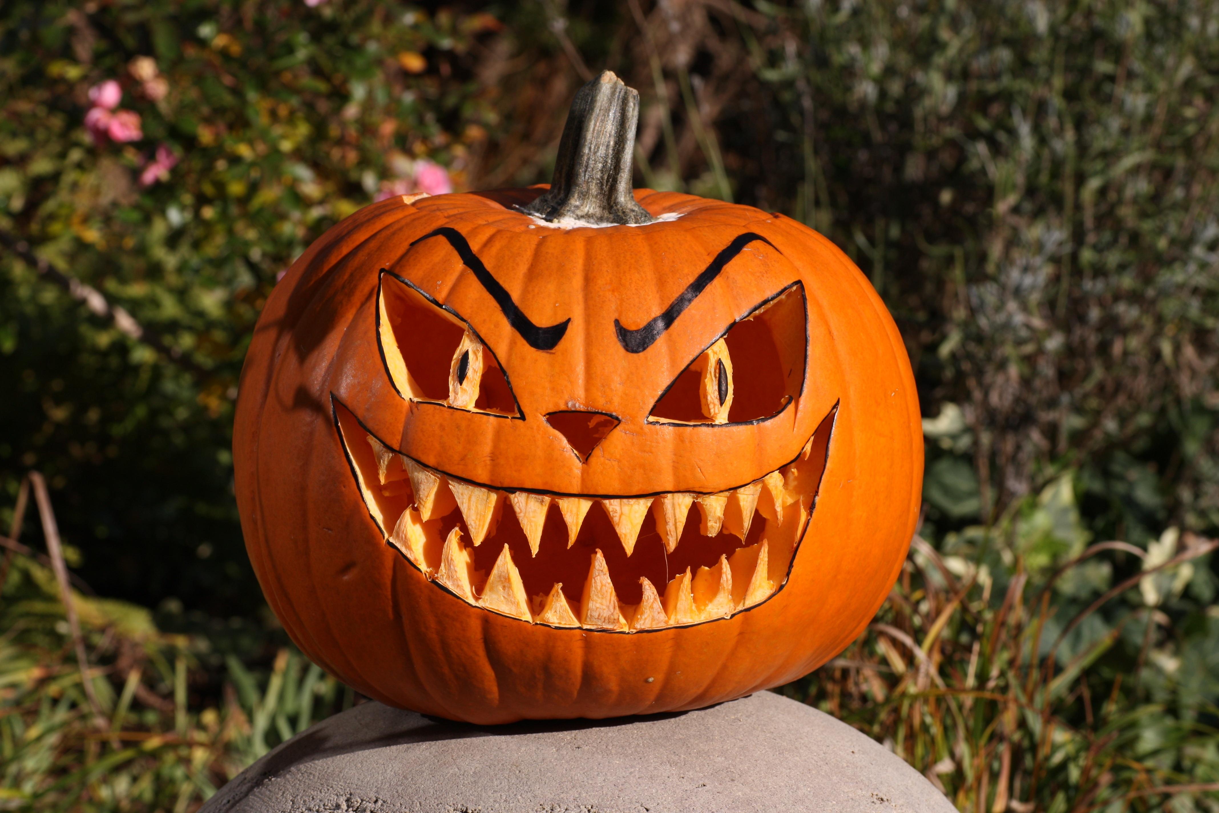 Funny Halloween Pumpkins Halloween Funny Pumpkin