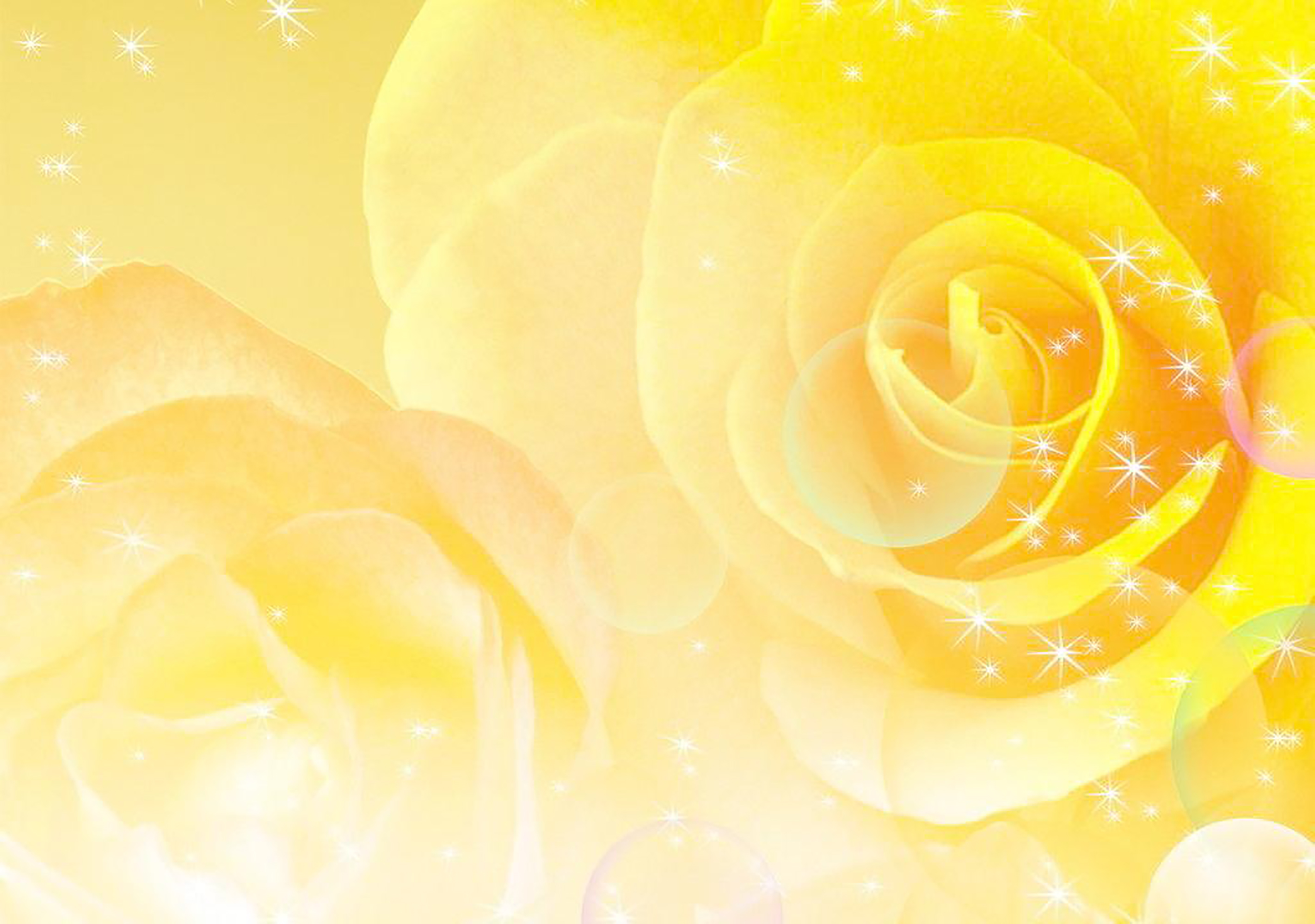 Yellow Rose Background Spring Flower Rose Background