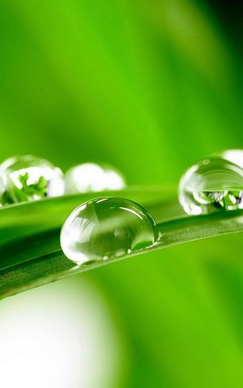 planter des gramin u00e9es herb contexte ros u00e9e wet jardin leaf