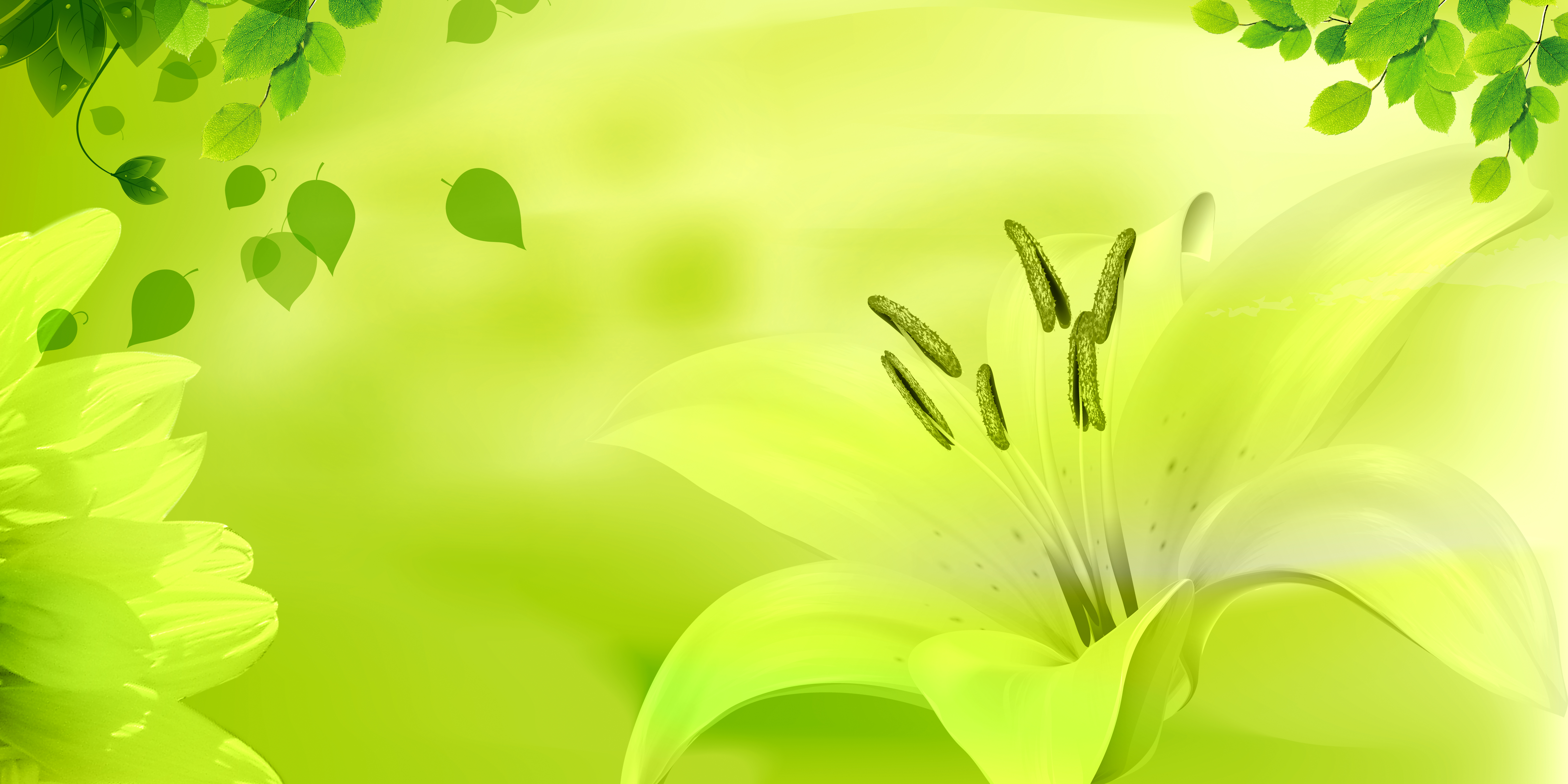 mod u00e8le esth u00e9tique cosm u00e9tique des affiches de fond jaune vert esth u00e9tique jaune vert des produits