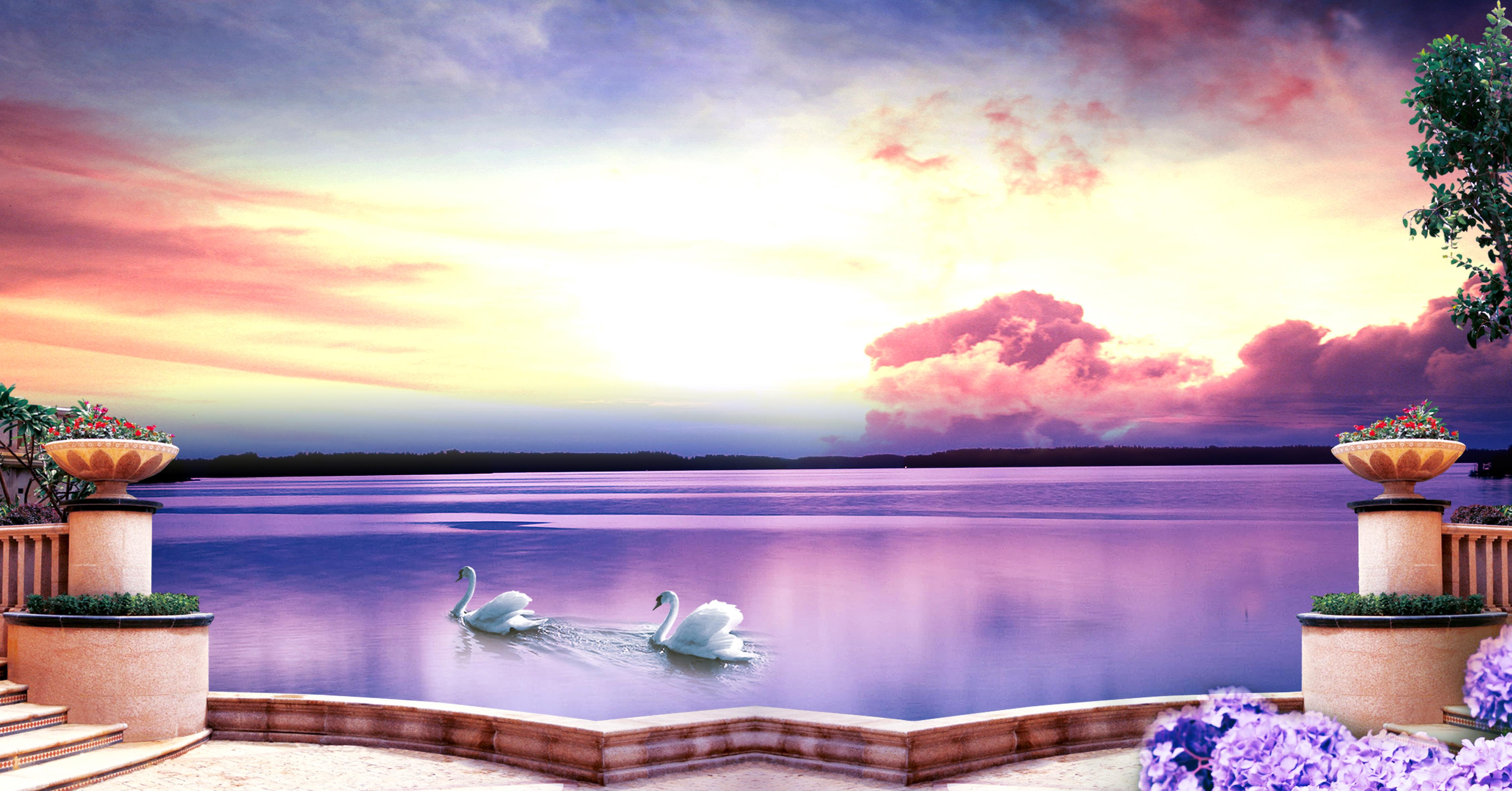violet swan river le fond d impression violet rivi u00e8re le