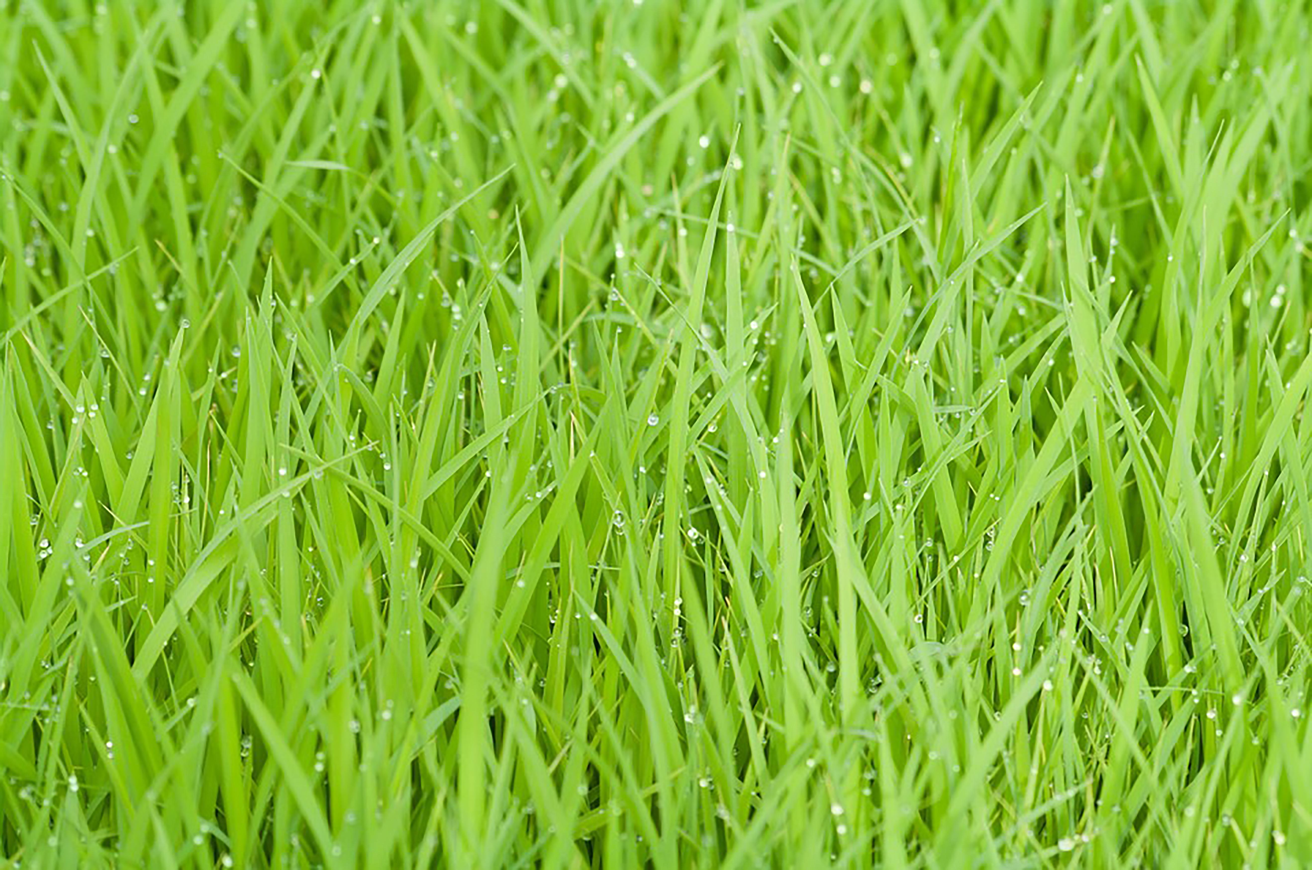 Erba Fresca E Solida Base Di Colore Verde Smeraldo Verde Naturale La