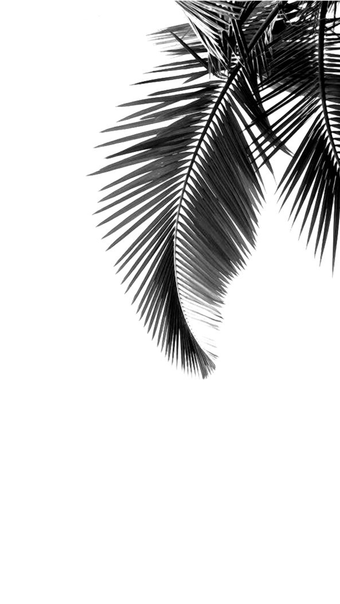 banana tree leaves simple black and white gray background